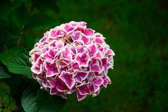 Kwiaty z piłką