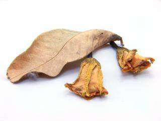 liście, artystyczne