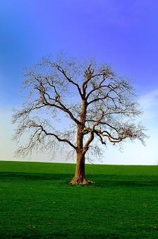 Natura północ sezon tło drzewo yorkshire