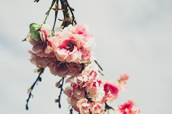 Oddziały z różowe kwiaty