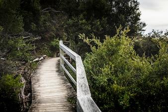 Pójdź wzdłuż lasu na wybrzeżu.