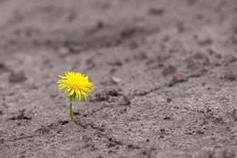 Rosnąca żółta kiełkowa kwiatka