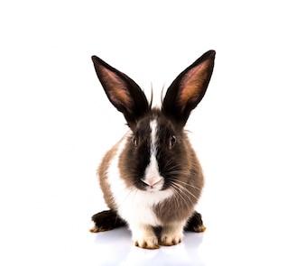Słodkie królik na białym tle