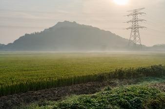 Scenic Widok Z Rice Field