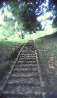 schody do nieba, ogród