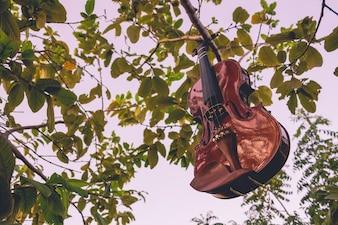 Skrzypce wiszące z drzewa