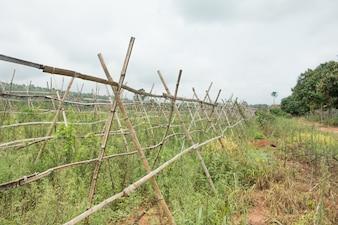 Stary wieszak bambusowy do plantacji w gospodarstwie.