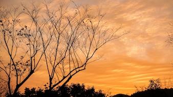 Suche drzewa z pomarańczowym tle chmur