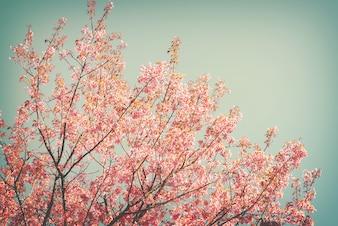 Tło przyrody piękne sakura różowy kwiat na wiosnę - serenity i rose kwarc zabytkowe pastelowe filtr kolorów