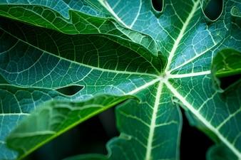 Tło tropikalnych liści miękkich koncentruje się liść obrazu