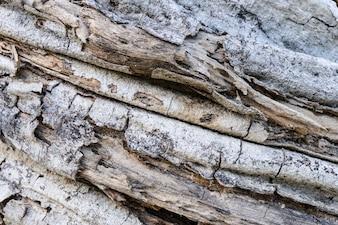 Tekstury natury