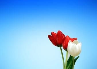 tulipany estetyczny estetyka wiosna