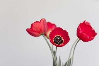 waza, lato, ogród, tulipany bukiet kwiat natura