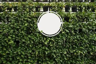 Wytnij pustą białą tablicę na ścianach roślin na tekst. montaż na wyświetlaczu produktu