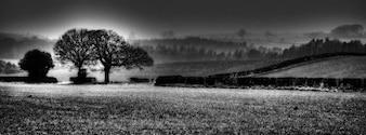 Yorkshire pole północ tło przyrodzie drzewo