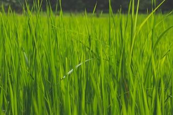 Zamknij się zielona trawa w polu