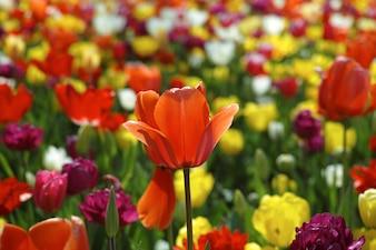 Zbliżenie kwitnący kwiat