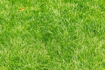 Zielona trawa bliska