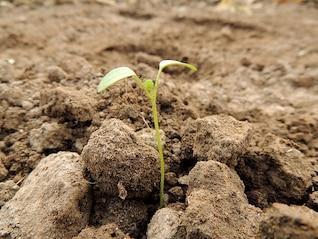 planta germen de la semilla marrón tierra cultivar alimentos