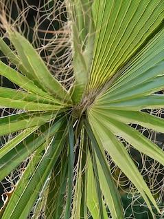James Washington hojas de palmito