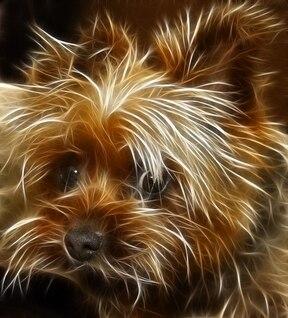 editar perro terrier nitidez editado animales