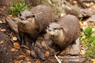 lago marrón peludo bigote fauna nadar piel húmeda