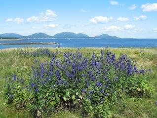 parque de las flores silvestres plantas maine acadia nacional