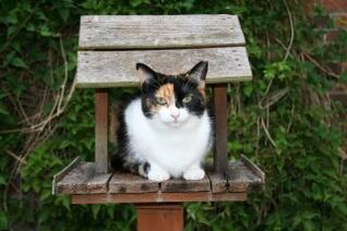 gato en la pajarera