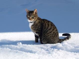 invierno gato