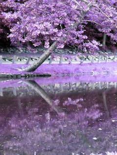 la reflexión de árboles, photoshop