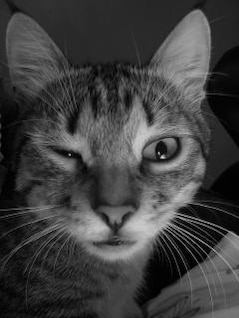 gato loco, batidores