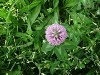 estallido de flores, la naturaleza