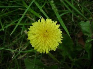 flor explosión