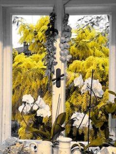 árboles amarillos,
