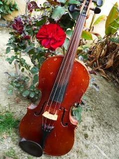 estudiar violín, instrumento