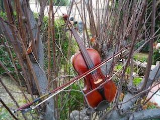 estudiar violín, la música