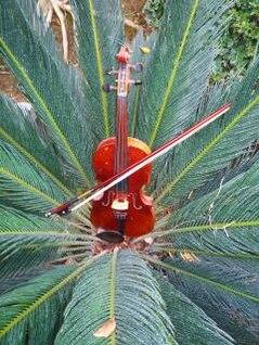 violín estudio