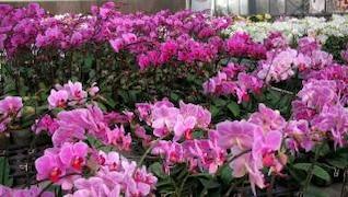 vivero de orquídeas