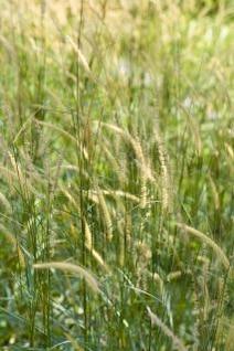 hierba verde, el color