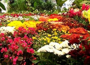 lecho de flores, pétalos