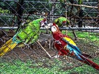 loros zoológico, la naturaleza
