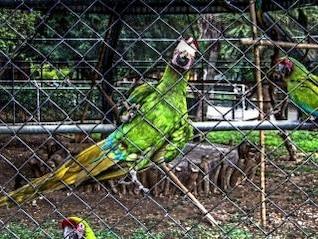 loro zoológico, palo