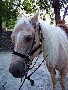 a caballo, montar a caballo