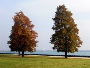 otoño, la naturaleza
