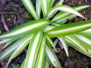 planta verde, la agricultura
