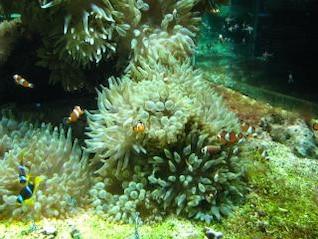 acuario en el museo oceanográfico en Mont, moluscos