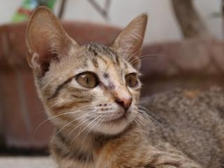 close-up gato, animales