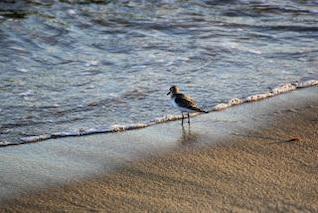 gaitero en la orilla del mar