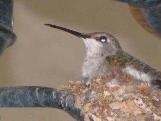 colibrí cerca