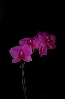 flores de color rosa de fondo